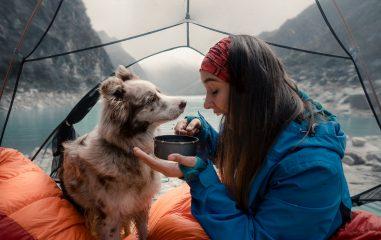 Köpeklerle kamp